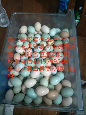 湖南省邵阳市洞口县五黑鸡鸡蛋 食用 箱装