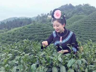 贵州省黔东南苗族侗族自治州雷山县雷山银球茶 散装 一级