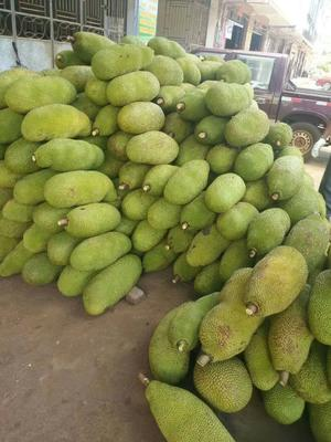 广西壮族自治区玉林市博白县海南菠萝蜜 15斤以上