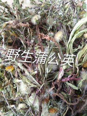这是一张关于蒲公英的产品图片