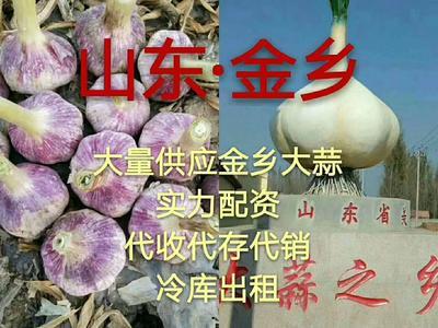 山东省济宁市金乡县金乡大蒜 混级统货 多瓣蒜