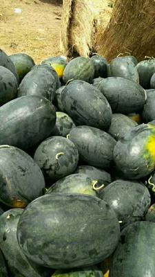 这是一张关于黑美人西瓜 有籽 1茬 9成熟 6斤打底的产品图片