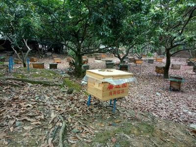 这是一张关于土蜂蜜 桶装 100% 2年的产品图片