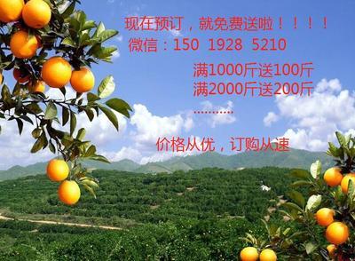 江西省赣州市会昌县赣南脐橙 65 - 70mm 4-8两