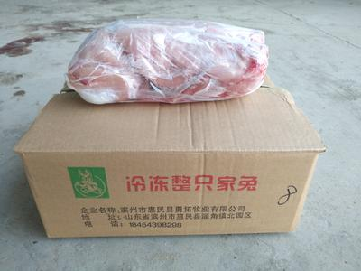 山东省滨州市惠民县兔肉类 冷冻