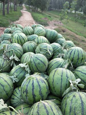 这是一张关于京欣西瓜 有籽 1茬 8成熟 7斤打底的产品图片