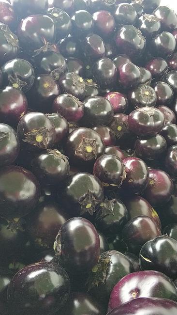 紫光圆茄 5两以上