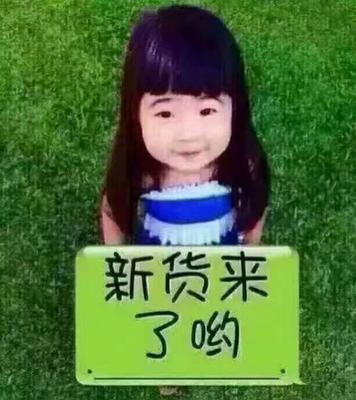 陕西省榆林市靖边县美国西芹 45~50cm 露天种植 0.5斤以下