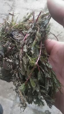 山东省菏泽市鄄城县干水草