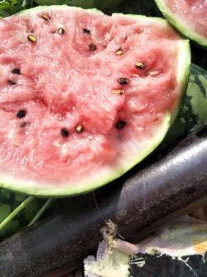 这是一张关于8424西瓜 有籽 1茬 8成熟 8斤打底的产品图片