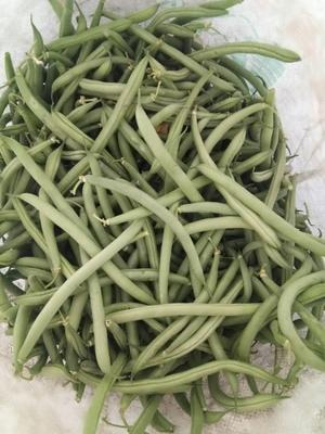这是一张关于地豆架豆青椒尖椒 8~15cm以上 不打冷的产品图片