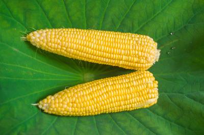 湖北省荆州市监利县先玉335玉米粒 霉变≤1% 净货