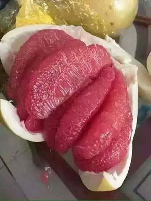 福建省漳州市平和县平和蜜柚 2.5斤以上