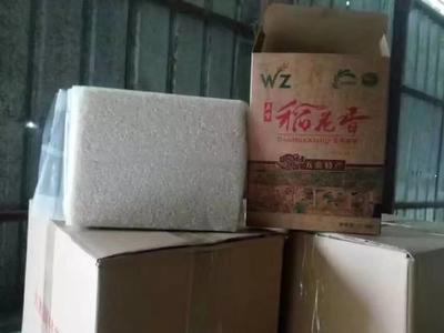 黑龙江省哈尔滨市五常市 稻花香大米 有机大米 早稻 一等品