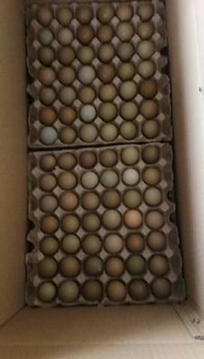 山东省济南市商河县野鸡蛋 食用 箱装