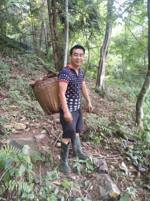 广西壮族自治区桂林市灌阳县野生灵芝