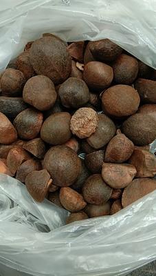 江西省宜春市樟树市油茶籽