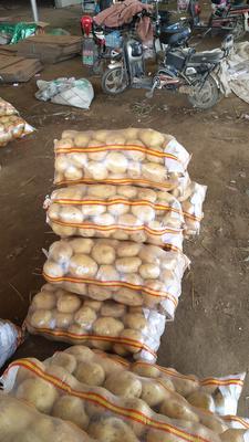 这是一张关于中薯5号土豆 3两以上的产品图片