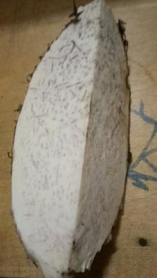 广东省茂名市电白区槟榔芋 6cm以上