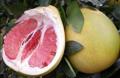广东省茂名市高州市红心柚 3斤以上