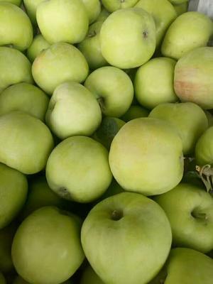 山东省临沂市沂水县青苹果 光果 翠绿 60mm以上