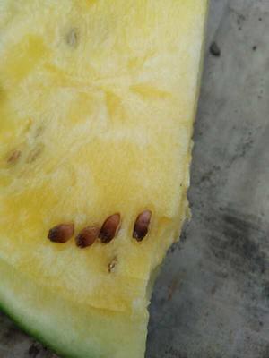 黑龙江省牡丹江市宁安市海南菠萝蜜 10斤以下