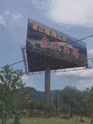浙江省台州市椒江区东魁杨梅 3 - 4cm