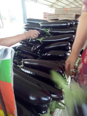 这是一张关于黑金刚长茄 5两以上的产品图片