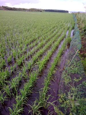 黑龙江省哈尔滨市通河县东北大米 有机大米 晚稻 一等品