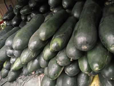 湖北省武汉市新洲区青皮冬瓜 20斤以上 黑皮