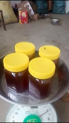 云南省保山市昌宁县土蜂蜜 塑料瓶装 100% 2年以上