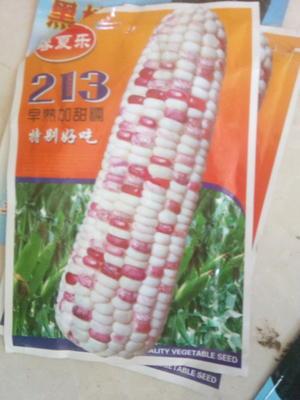 河北省保定市顺平县嫩玉米