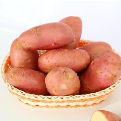 云南省昆明市寻甸回族彝族自治县青薯9号 2两以上