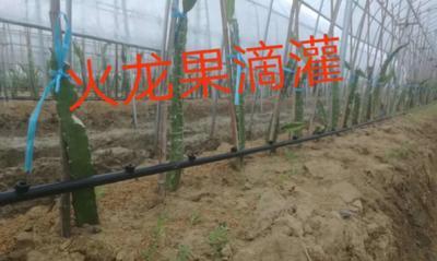 山东省菏泽市牡丹区滴灌喷灌