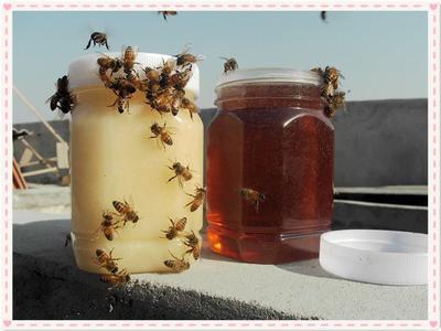 湖北省孝感市孝昌县意蜂蜂蜜 塑料瓶装 90%以上 2年以上