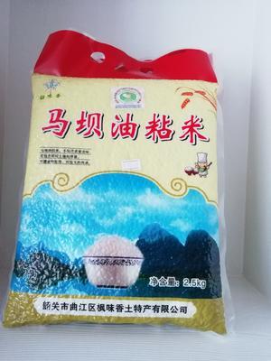 广东省韶关市曲江区马坝油粘米 有机大米 晚稻 一等品