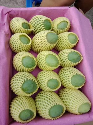 这是一张关于田东香芒果 4两以上的产品图片