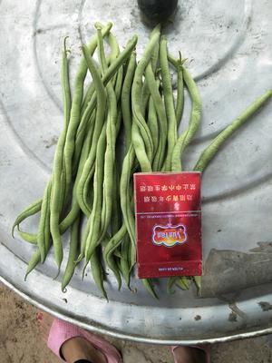 山西省忻州市忻府区无丝豆 15cm以上