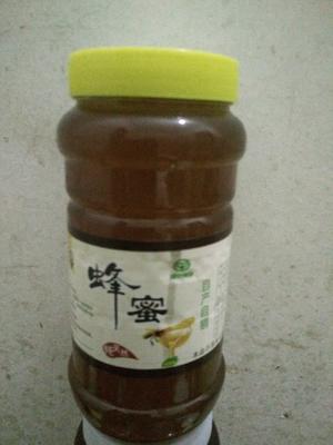 广东省茂名市电白区土蜂蜜 散装 100% 2年