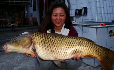 江苏省南京市下关区池塘鲤鱼 人工养殖 1.5-6龙8国际官网官方网站