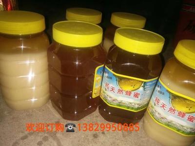 广西壮族自治区贵港市平南县土蜂蜜 塑料瓶装 90%以上 2年