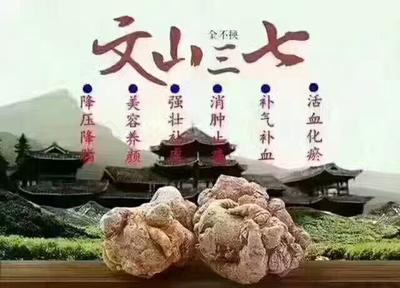 云南省昆明市寻甸回族彝族自治县三七
