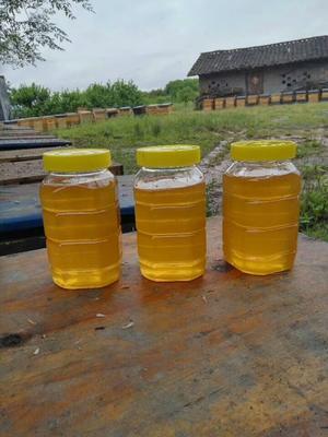 江西省抚州市广昌县土蜂蜜 塑料瓶装 95%以上 2年