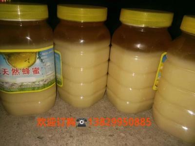 广西壮族自治区贵港市平南县土蜂蜜 塑料瓶装 95%以上 2年