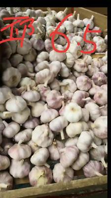 贵州省黔南布依族苗族自治州龙里县邳州大蒜 6.0cm 多瓣蒜
