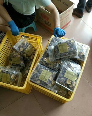 广东省惠州市龙门县原木干香菇 礼盒装 1年以上