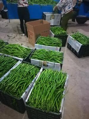 这是一张关于二荆条辣椒 20cm以上 靑色 中辣的产品图片