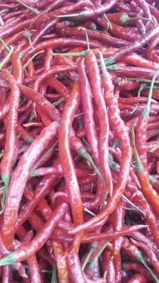这是一张关于二荆条辣椒 15~20cm 红色 中辣的产品图片