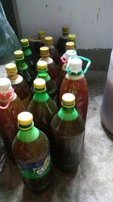 这是一张关于土蜂蜜 塑料瓶装 98% 2年的产品图片