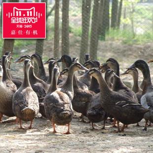 这是一张关于肉鸭 统货 半圈养半散养 4-5斤的产品图片